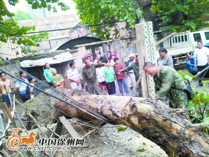 旭光小区里一棵30多米高的法桐树在风雨中轰然倒下,造成居民出行受