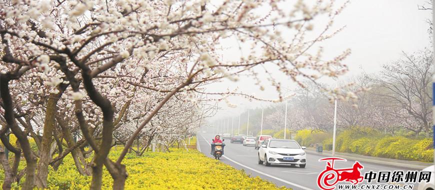 走,到湖东路欣赏春天最美的路