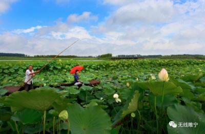古邳镇抢抓农业产业结构调整,重点培育设施瓜菜,果品采摘,苔干等多个